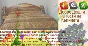 Семеен хотел РУДИ, село Горно Драглище