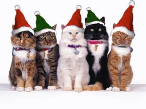 Коледни мечти: Будапеща – Братислава – Виена